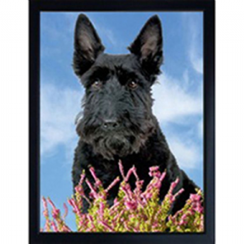 SCOTTISH TERRIER 3D FRIDGE MAGNET